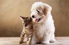 Pets são mais novo motivo de nome sujo