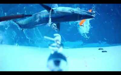 VIDEO:  Wahoo Fishing Underwater Strike on Desperado Series Lure