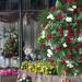 DTLA Flower Mart