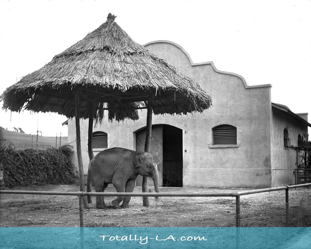 Selig Zoo