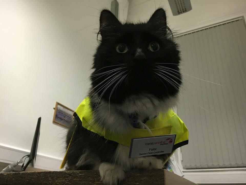 Source: Facebook/Felix the Huddersfield Station Cat