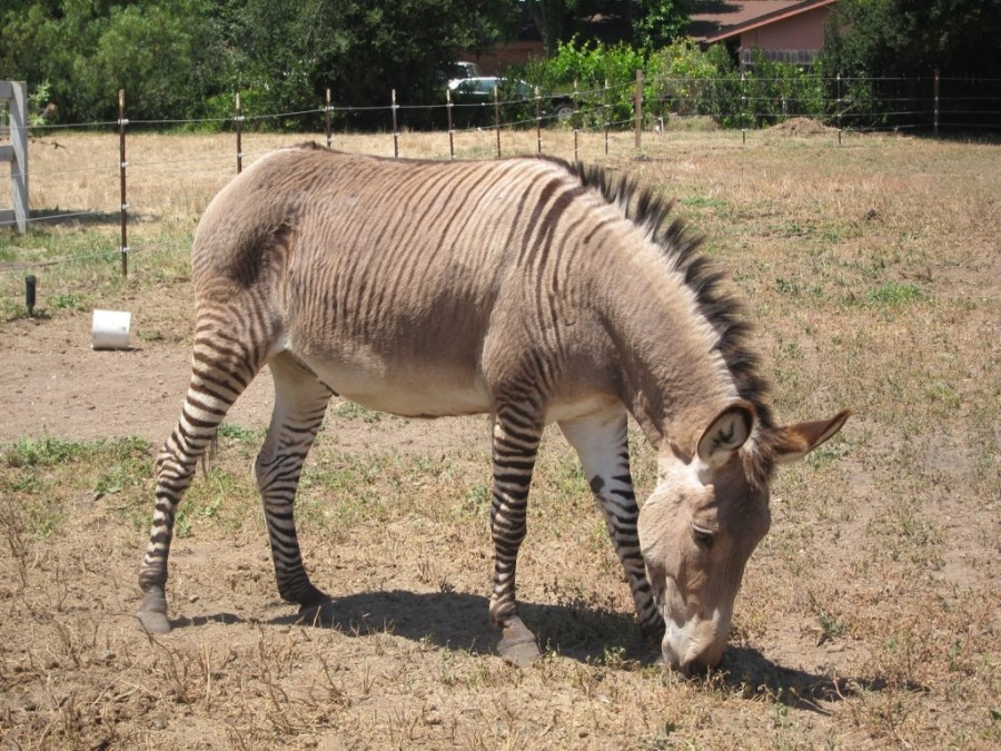 Source: Zonkey
