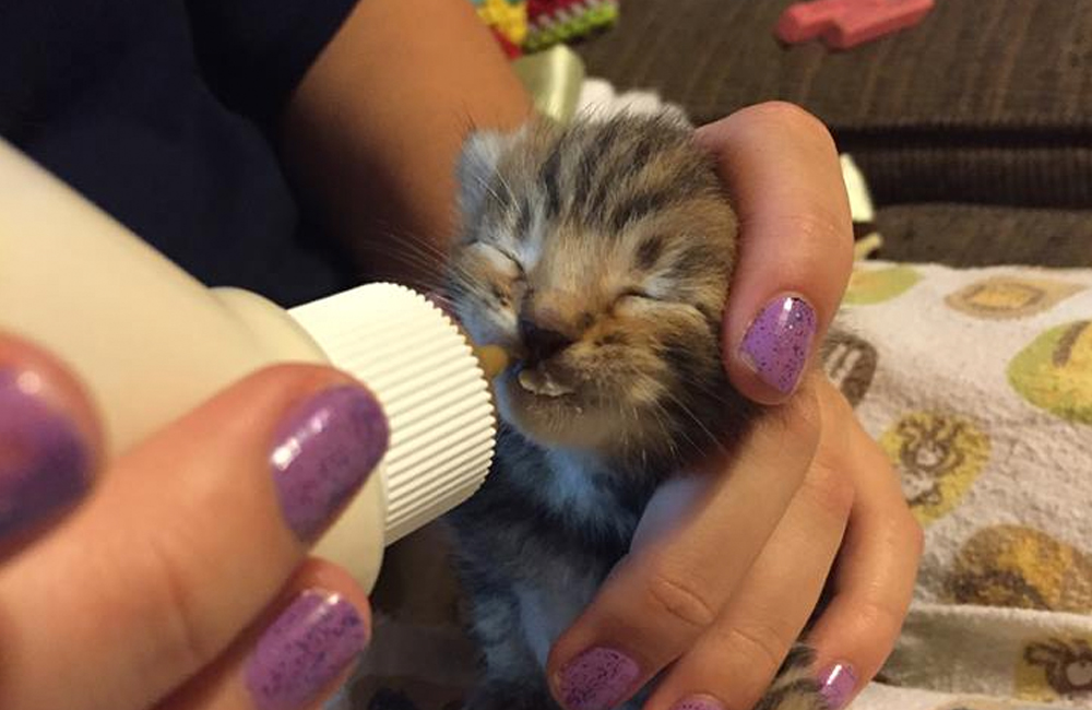 Source: Facebook/Kitten Warriors