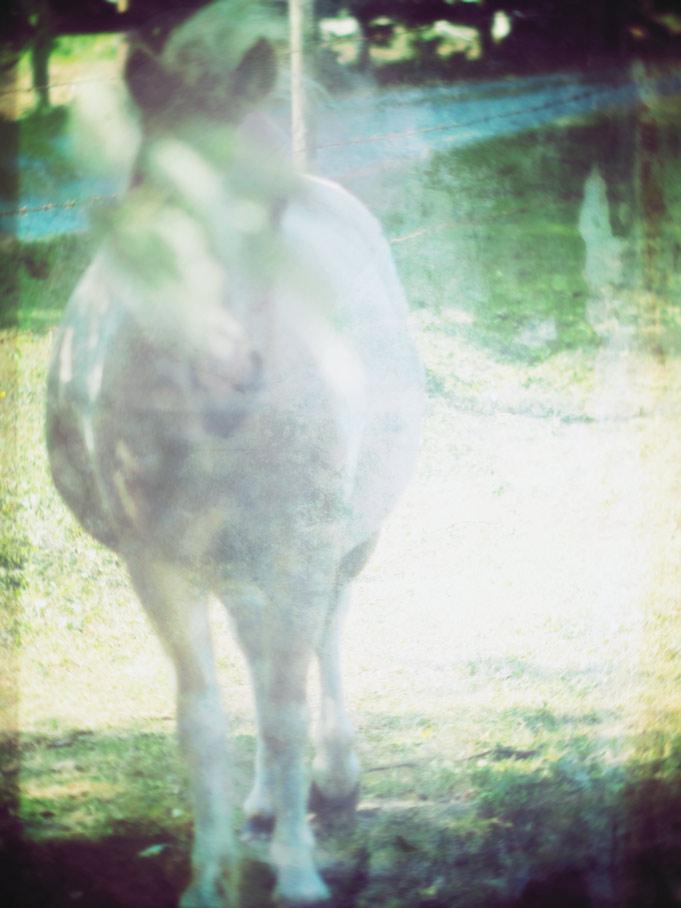 Misty Mountain Horse