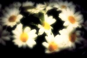 1cfc6-0496fakeflowers