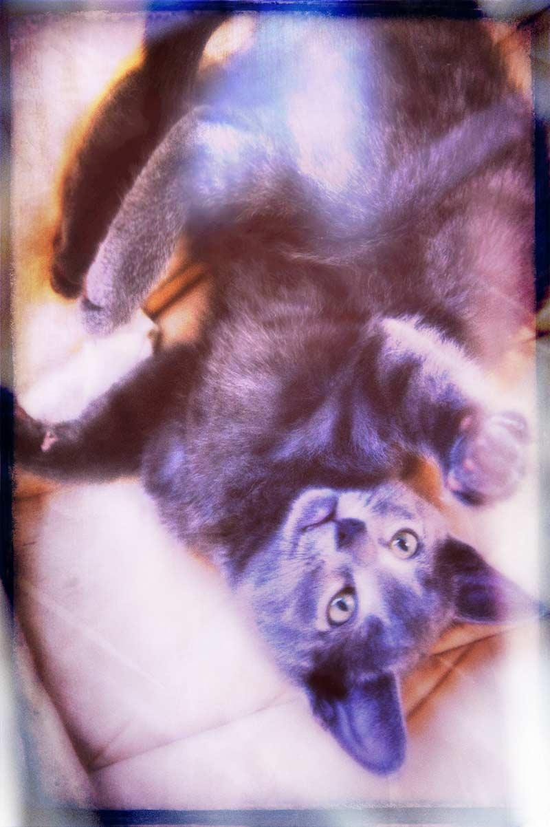 Playful little Kitteh