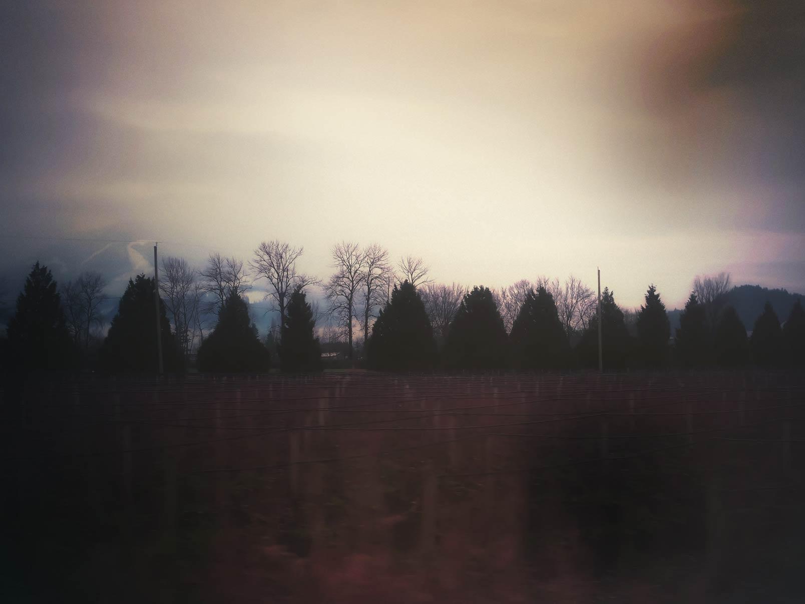 Christmas Tree Mourning