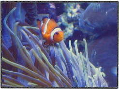 8dbd6-0428herefishy