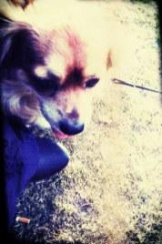 f7d56-0708prettydog