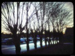 1993trees