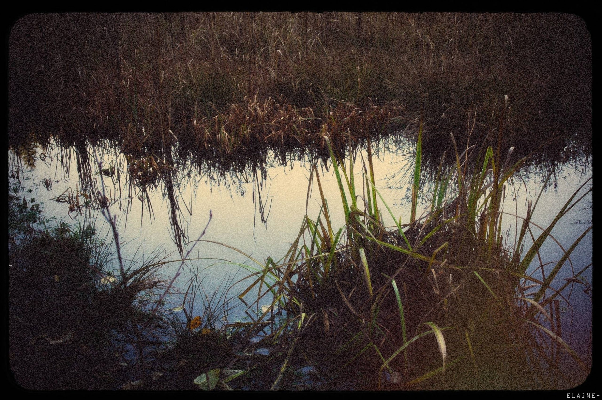 Reading in the Reeds