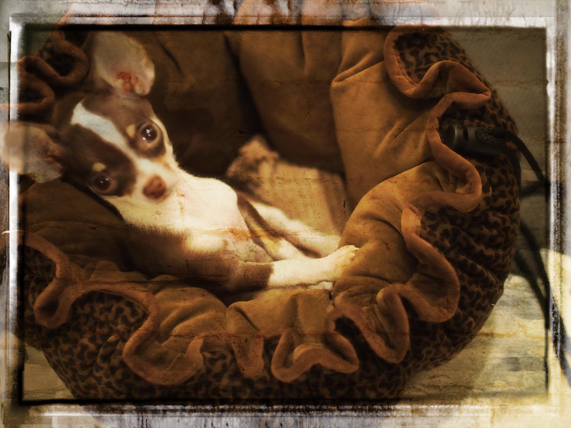 The Puppy Jesus Loved