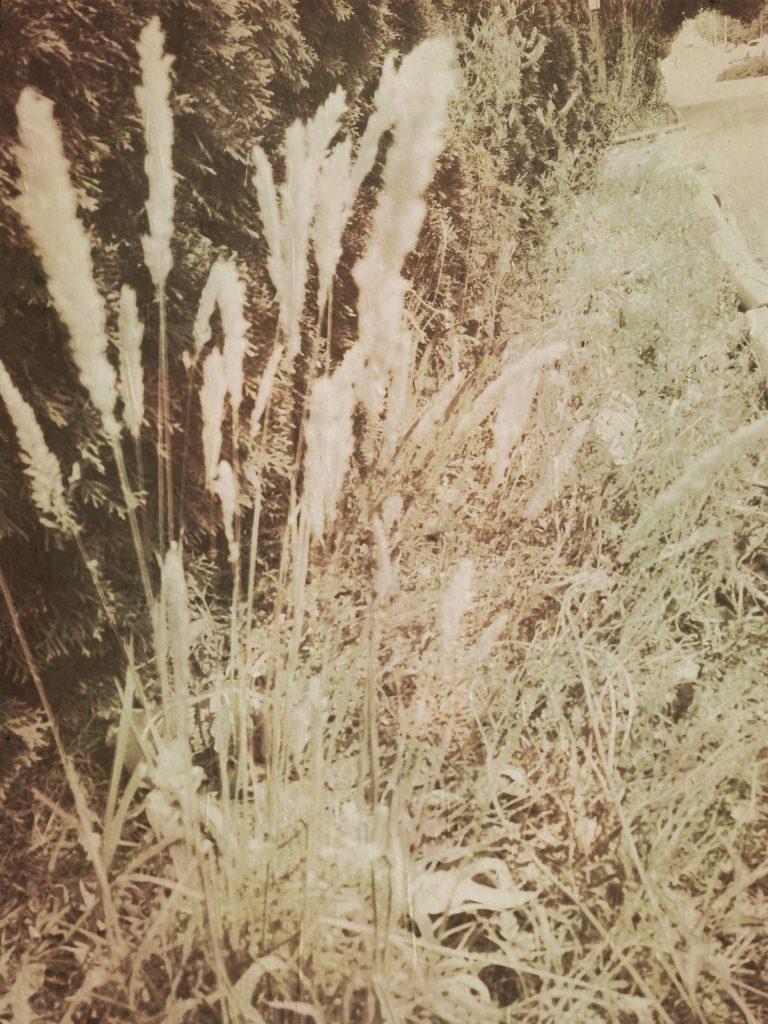 Mini Wheats :)