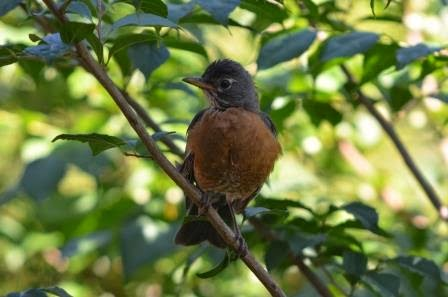 A baby bird in the tree