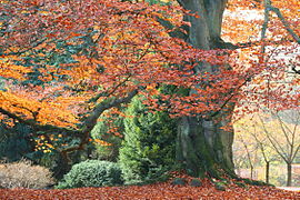 A fall tree wit colorful leaves