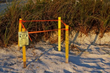 Image result for pictures of protected loggerhead nests on beach