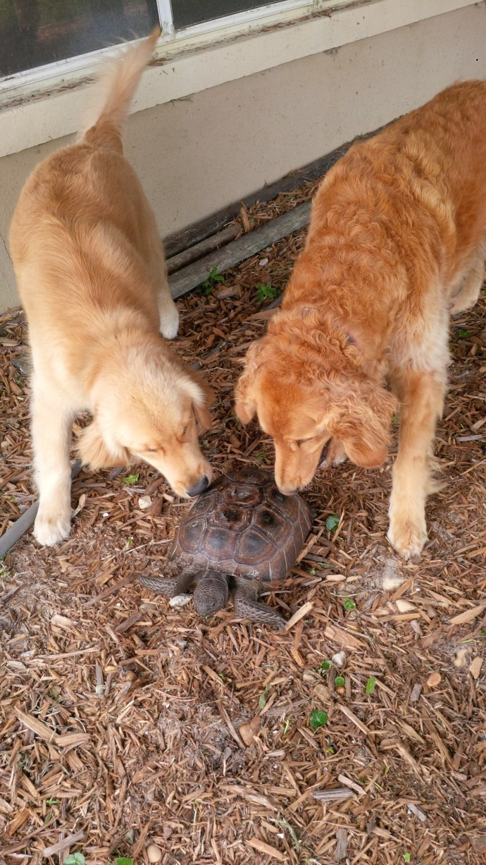 Charley, left, and Max visit daily with their good friend, Edgar the Gopher. According to reports Edgar seeks out the pups on a daily basis.