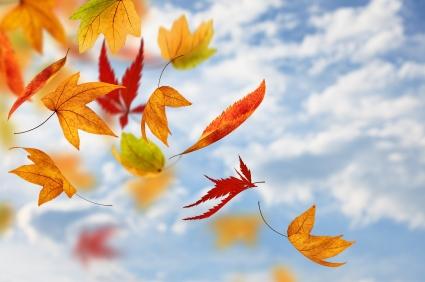 Falling Maple Leaves Wallpaper A Cleansing Season Totallyuniquelife Com