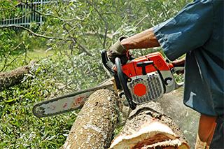 tree service tree limbing