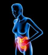 somatic gut health
