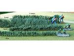TSST001 - Mini hedge