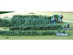 TSST003 - Large hedge