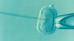 Image shows IVF of an egg cell,