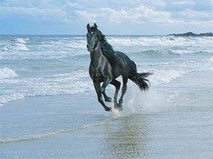 caballo animal de poder