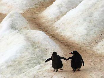 pinguinos animales tótemicos