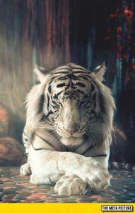 tigre significado