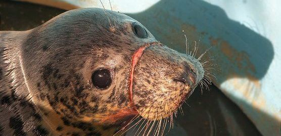 fauna marina en peligro en Asturias