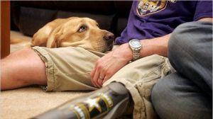 estos perros han dado su vida al servicio público. Ahora merecen acabar su vida con asistencia veterinaria gratuita