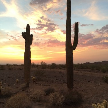 Arizona Cactus at Sunset