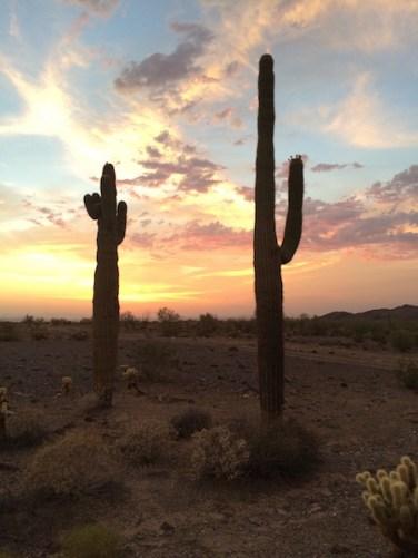 Arizona Cactus at Sunset