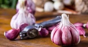 properties of garlic