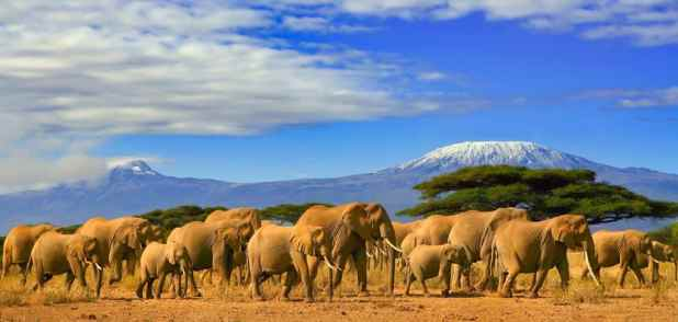 Elephants in Tanzania finally Have their day in Court (1)