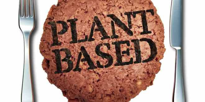 Plant based meat