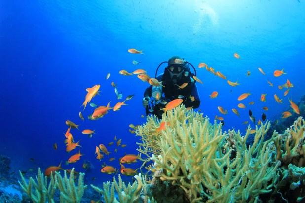 Underwater Scuba Diver via Vacation Store Aruba