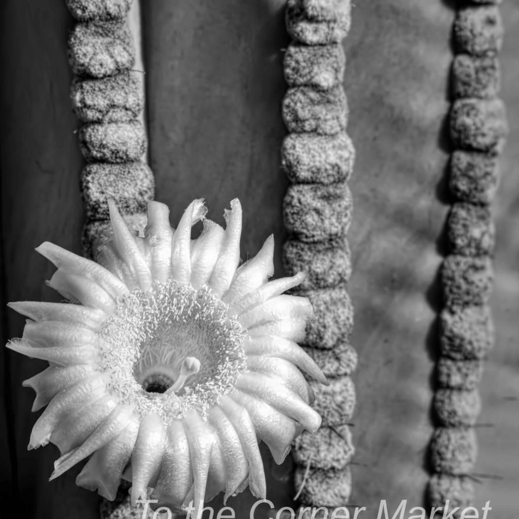 Silver Desert Jewel