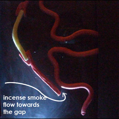 how incense smoke bypass totobobo filter