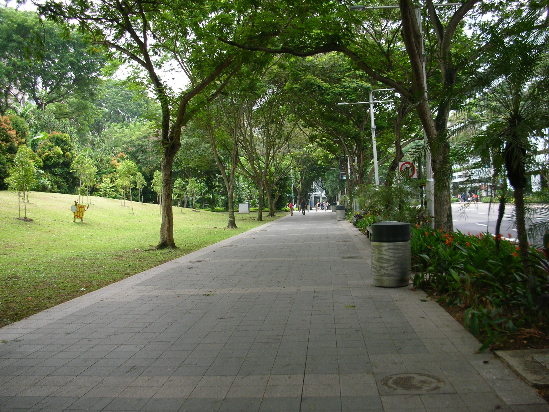 Ped near Istana Park Orchard
