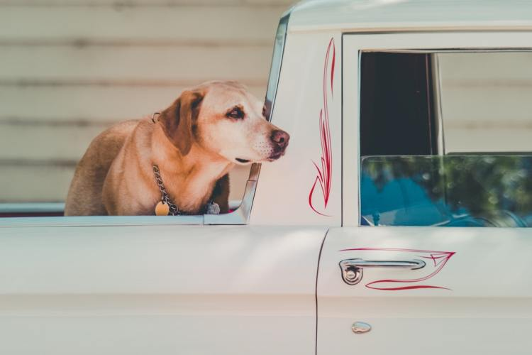 Best Dog Crate for Truck Bed