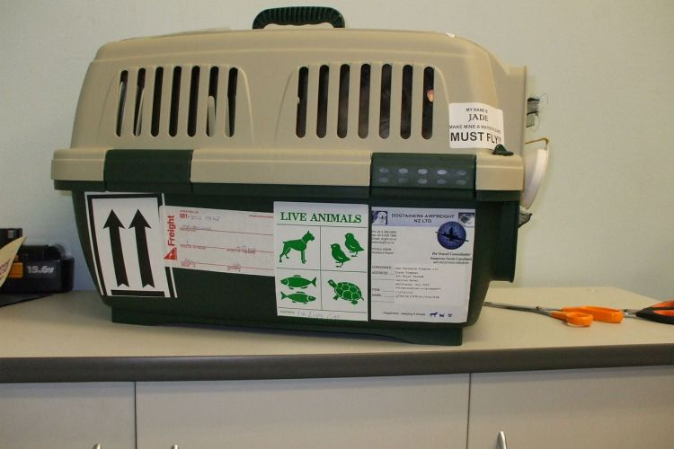 IATA compliant pet crate
