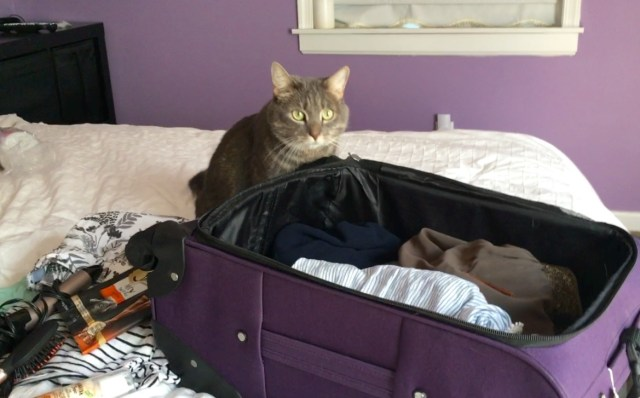 prepare for a weekend getaway with pets