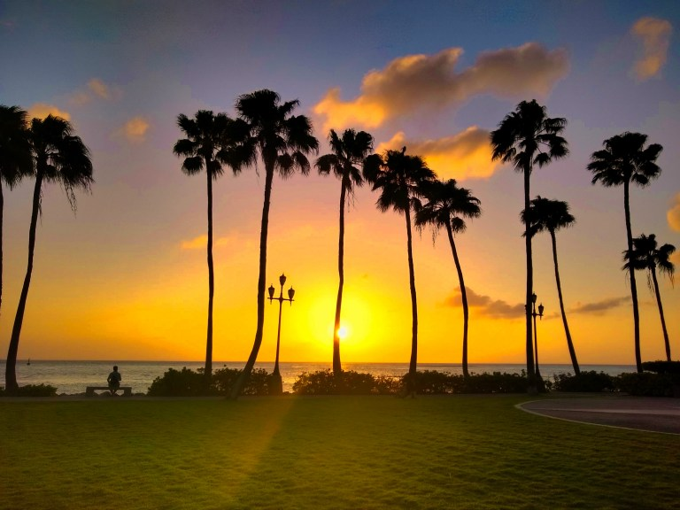 Catching an Aruba sunset over palm trees at Renaissance Beach, for Ellen Blazer's travel blog To Travel and Bloom