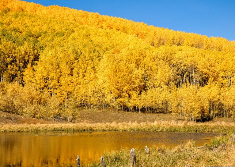 Aspen reflections at Beaver Pond