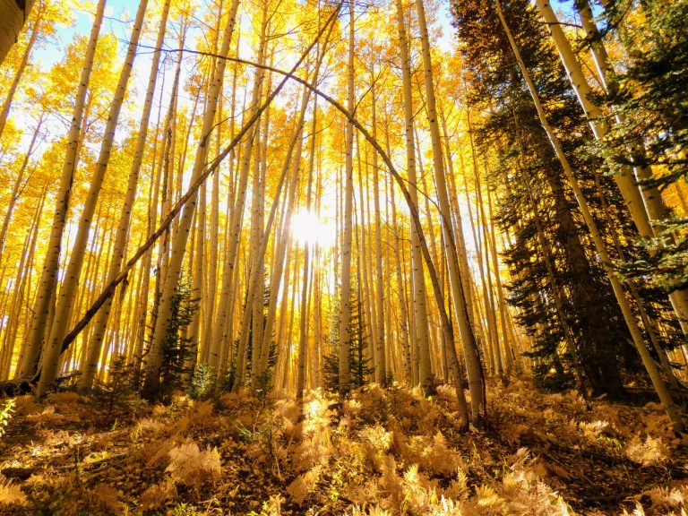 Colorado Aspens scaled - 3 Best Places for Fall Colors in Crested Butte, Colorado