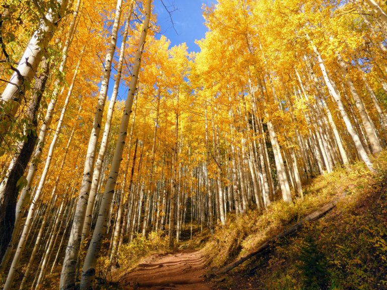 Fall colors at Horse Ranch Loop in Crested Butte