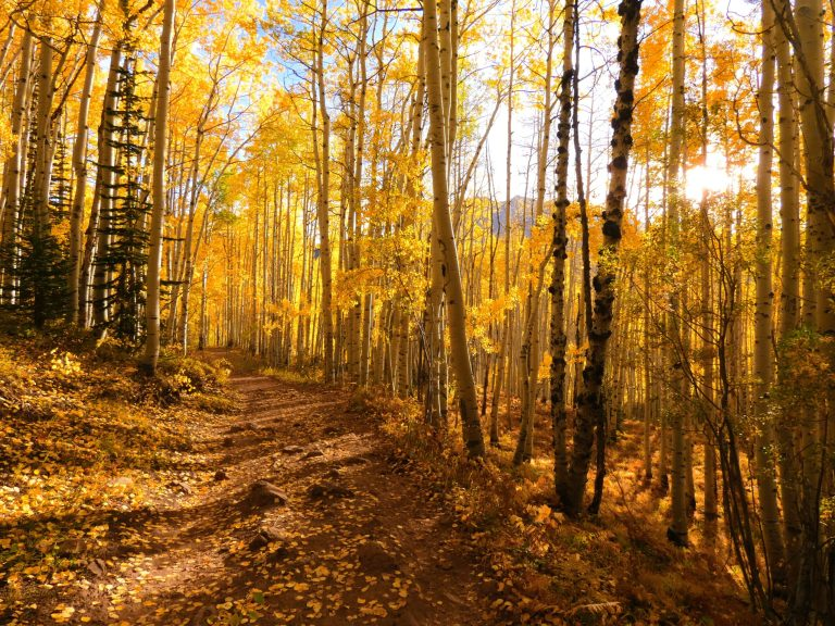 Horse Ranch Loop Trail scaled - 3 Best Places for Fall Colors in Crested Butte, Colorado