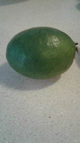 The humble feijoa